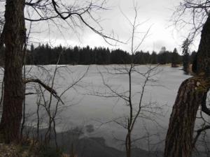Mýtský (Nový) rybník